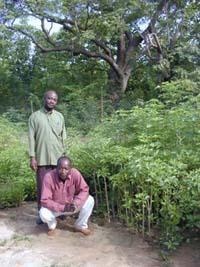 Messieurs Bationo et Nagalo devant leur jardin de Baobab