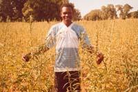 L'Abbé Zéphyrin dans un champs de sésame
