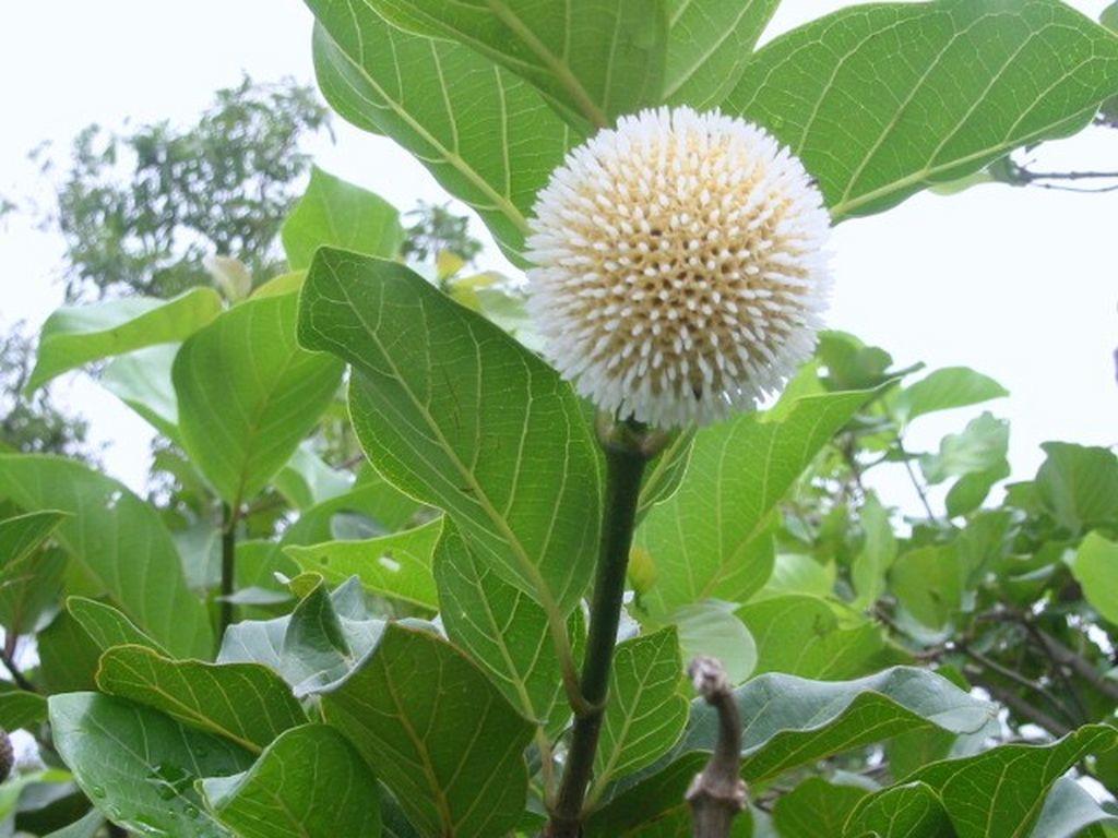 quelles plantes soigner colon irritable