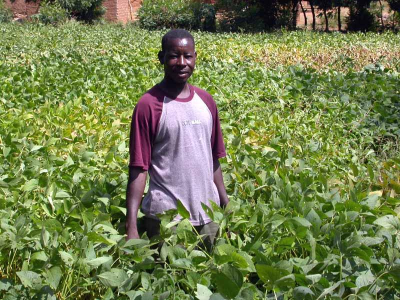 Un paysan de Boni fier de son champ de soja