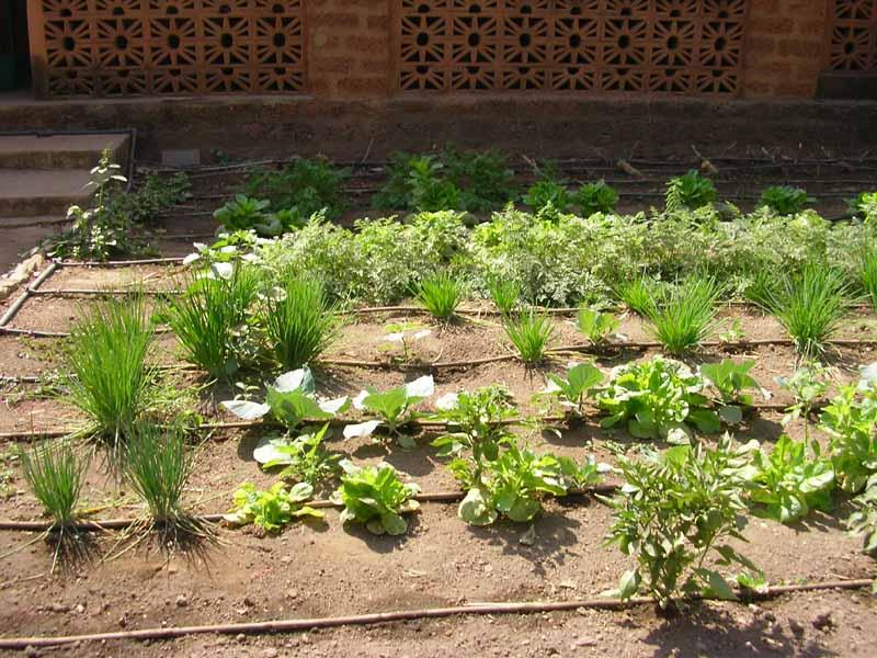 abcburkina 408 investir dans la petite irrigation. Black Bedroom Furniture Sets. Home Design Ideas